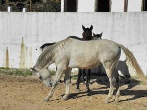 Segredos de Aldeia Horse riding