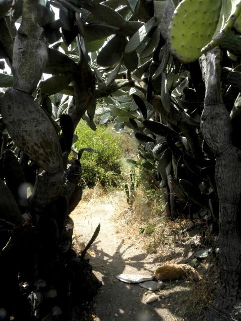 cactus-path