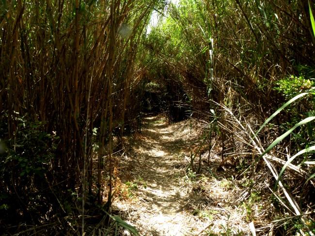 cane-path