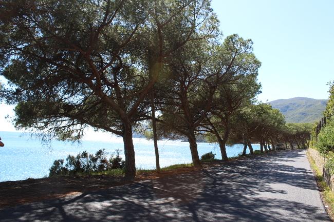 Arribida road