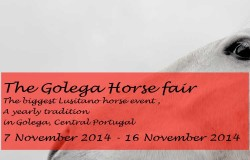 The Golega Horse fair 2015 coming up again in November!