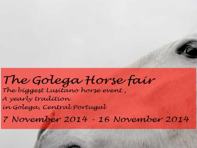Golega horse fair 2014