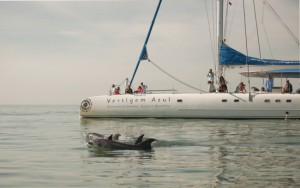 Dolphin watching Catamaran Sado estuary