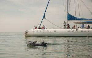 Dolphin watching Catamaran Sado estuary