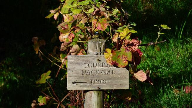 Sintra Wine walk