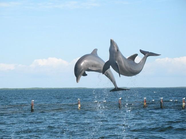 Dolphin watching Nazare