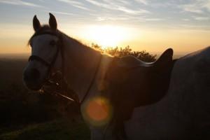 horse riding tours, mountain rides, Setubal