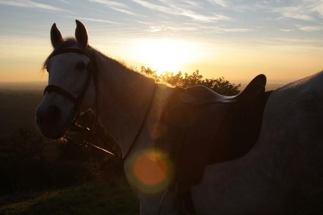 Horse riding Setubal