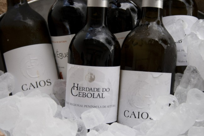 Herdade do Cebolal wine tasting