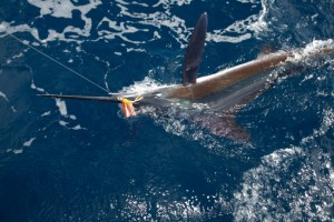 Deep sea fishing and boat trips, Azores