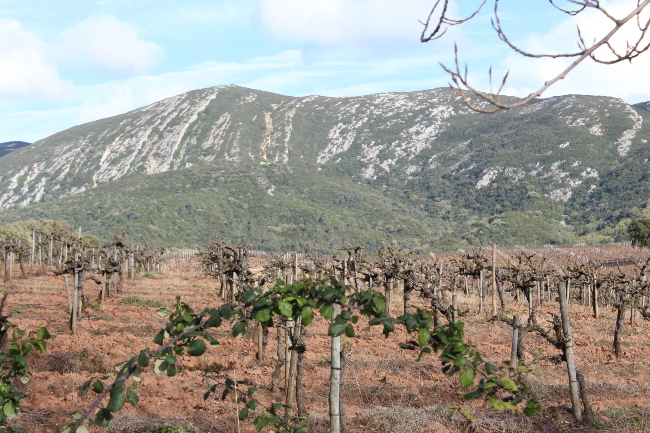 Vineyard Arrabida