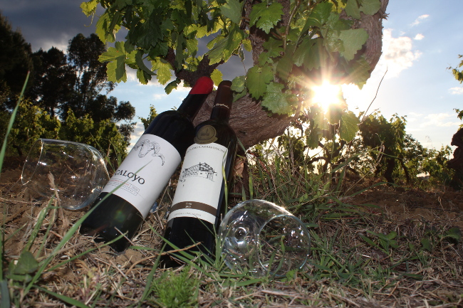 Quinta das Carrafouchas, Lisbon wine events
