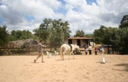 Equine Assisted training, Portuga