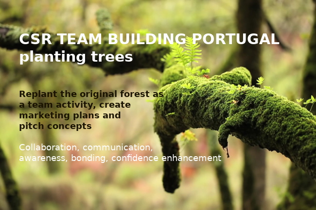 CSR reforesting Portugal, Team buiding