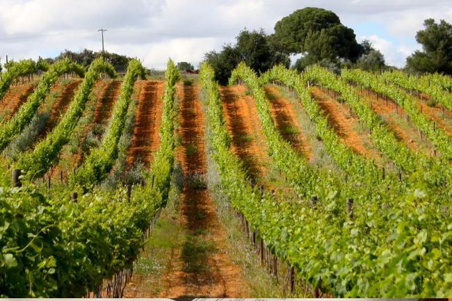 Quinta dos Vales, wines, Algarve