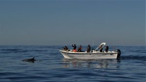 Boat tours, Dolphin watching, Sport fishing, Faro, Algarve