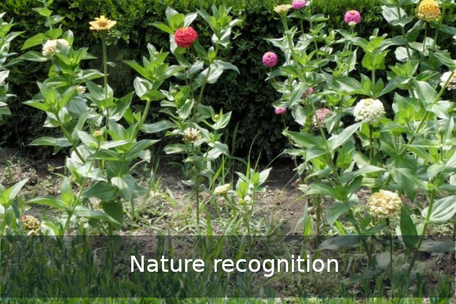 Go Discover nature recognition Team building